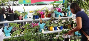 fete-plant-stall